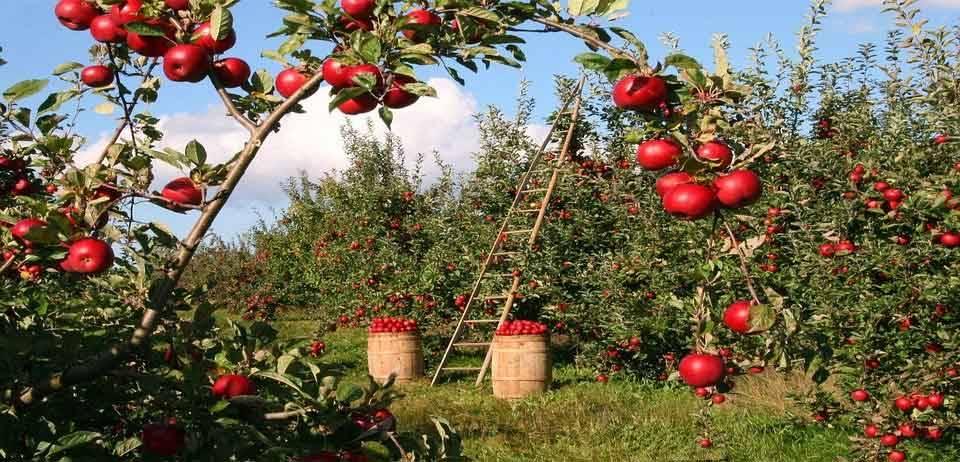 Hangi Meyve Ne İşe Yarar? 8