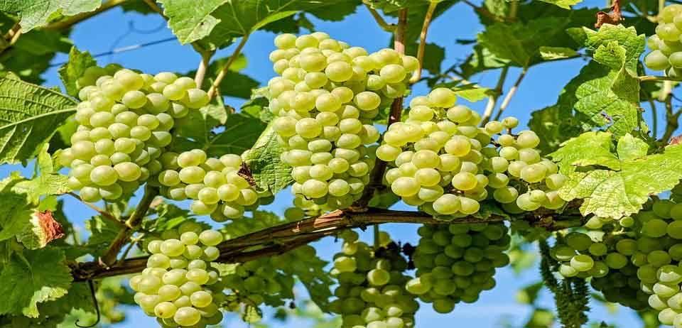 Yaz Meyvelerini Tüketirken Dikkat Edilmesi Gerekenler 4