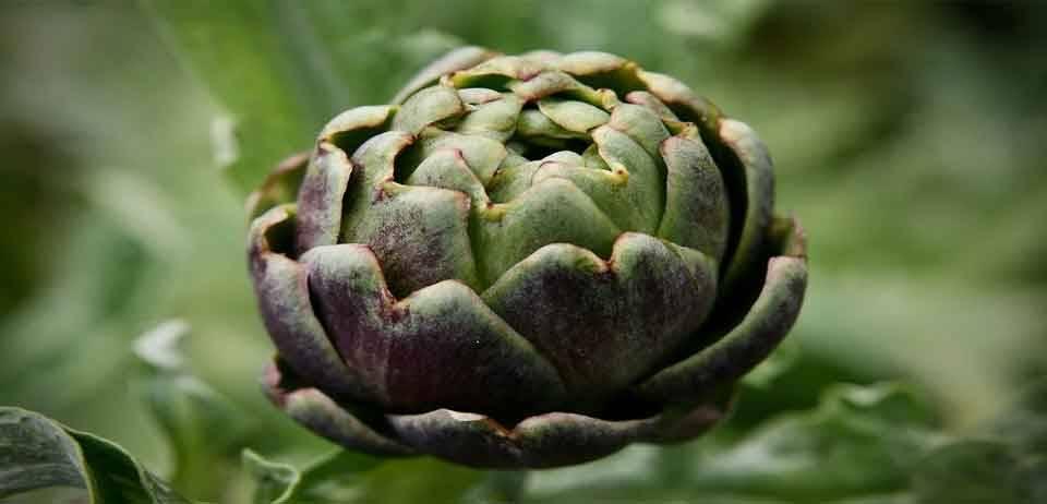 Formda Kalmanızı Sağlayacak Sebzeler 3