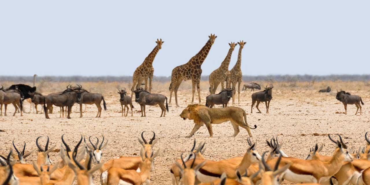 Yeryüzünde, insandan başka kaç canlı türü yaşamaktadır