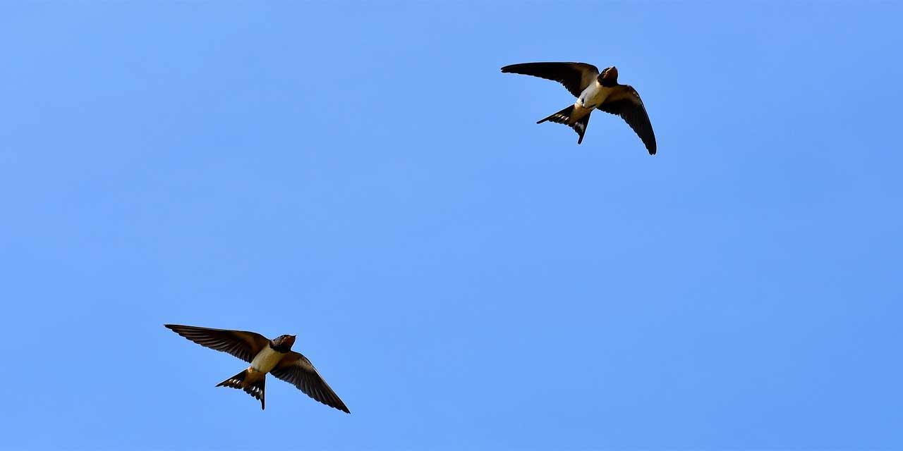 Sebepsiz kuş bile uçmaz atasözünün anlamı nedir