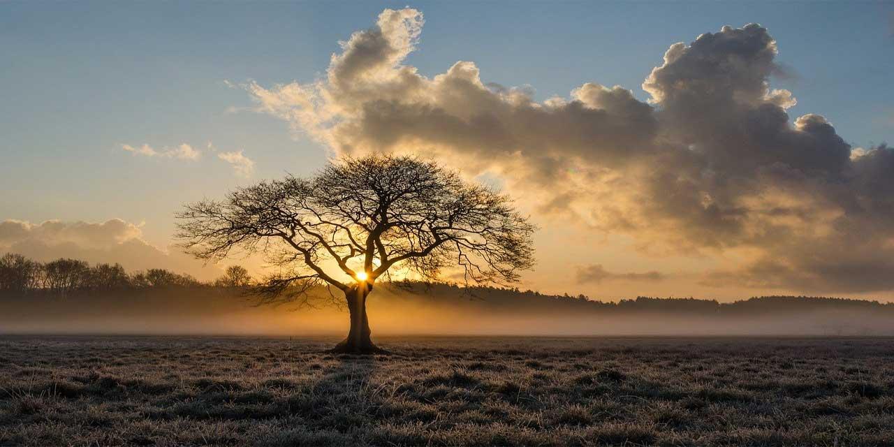 Ağaç yaş iken eğilir