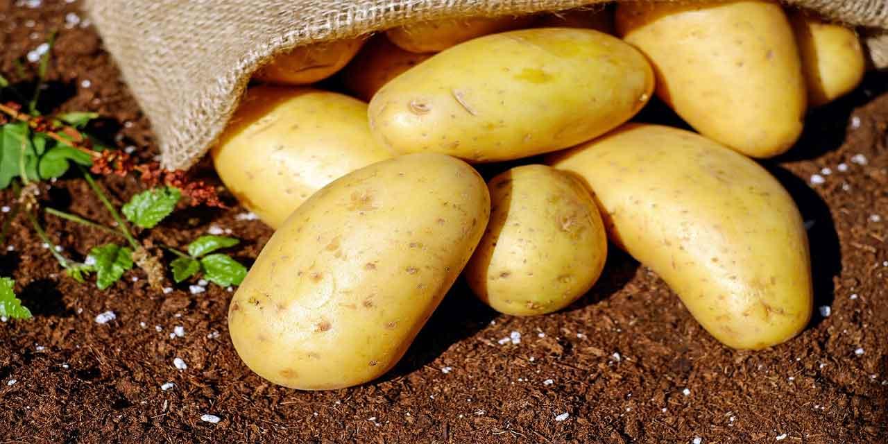 Patatesin faydaları nelerdir