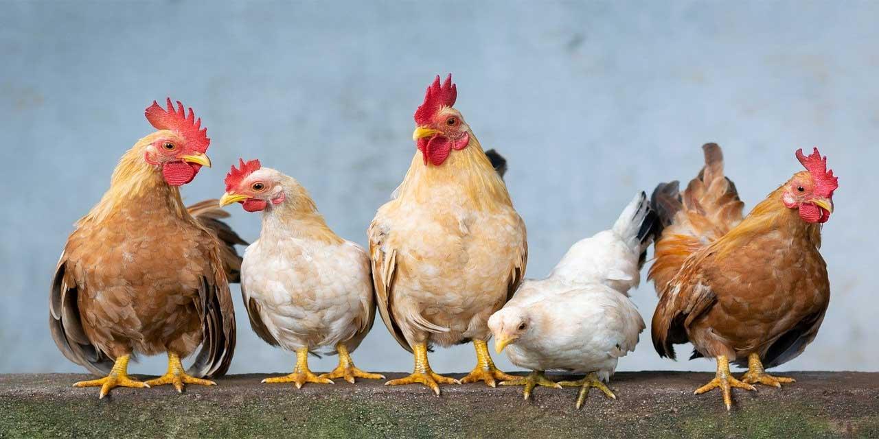 Yarınki kazdan, bugünkü tavuk yeğdir atasözünün anlamı