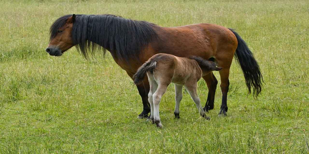 Binek atlarını yönetmek için dizgine bağlı olan ve atın ağzına takılan demir nesne hangisidir