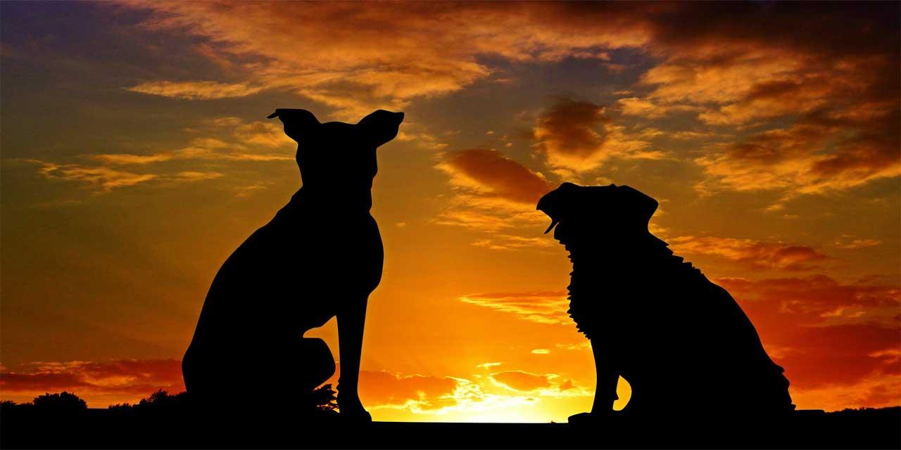 Hayvanların korunması için neler yapabiliriz