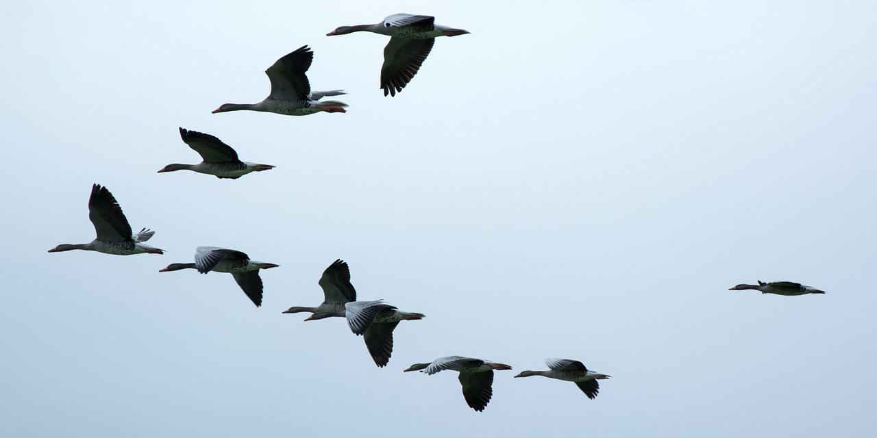 Göçmen kuşların göç etmelerinin temel nedeni ne olabilir