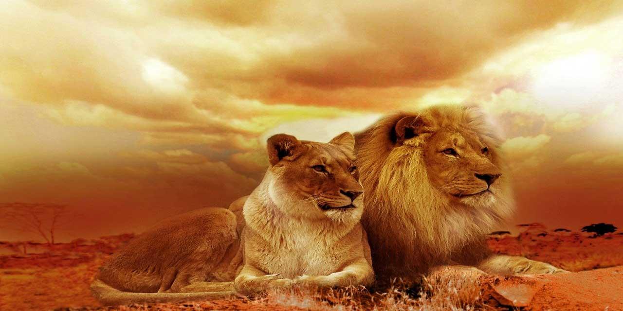 Yatan aslandan, gezen tilki yeğdir atasözünün anlamı