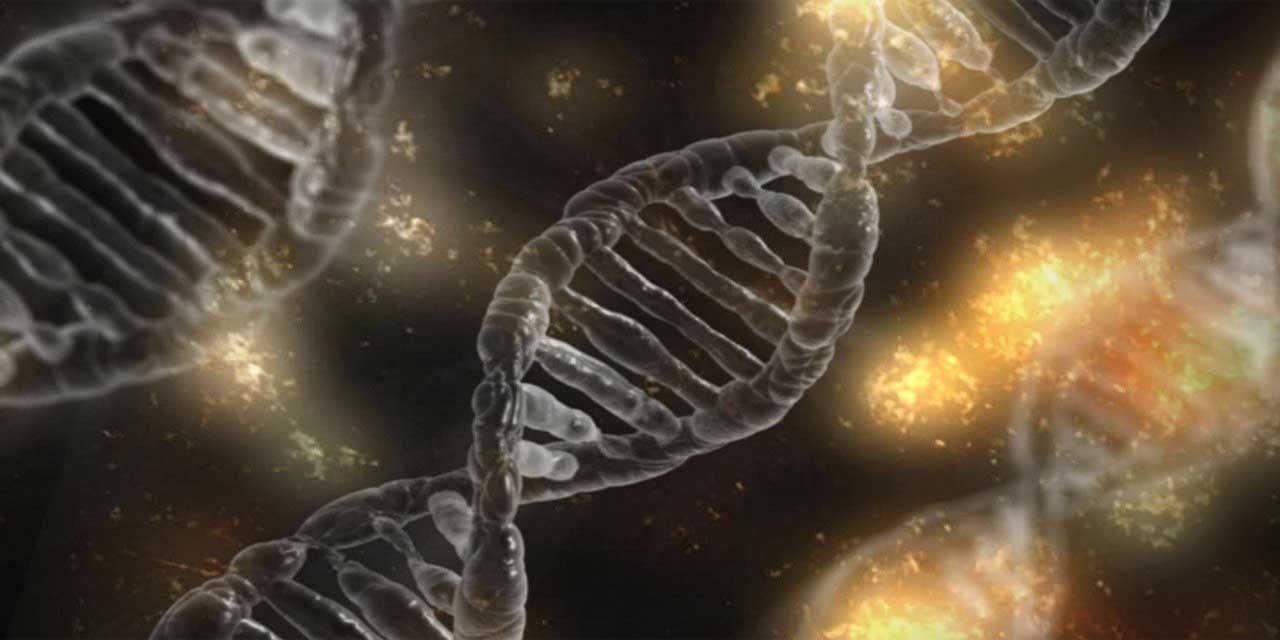 DNA'nın özellikleri ve görevleri nelerdir