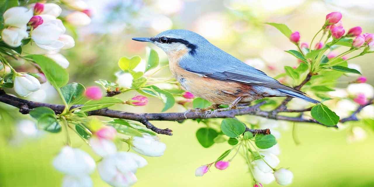 İlkbahar mevsimi