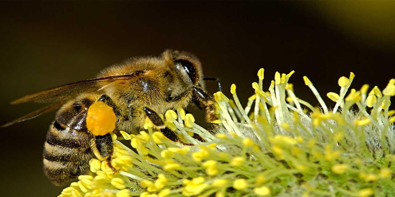 Bal arılarının toplam kaç gözü vardır