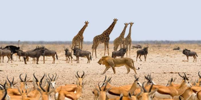 N harfiyle başlayan hayvan isimleri