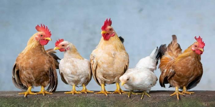 3 tavuk 2 yılan ve 4 tavşanın olduğu bir yerde ayak sayıları toplamı kaç olur
