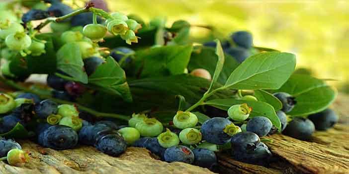 Türk Dil Kurumuna göre hangi meyvenin diğer adı çoban üzümüdür