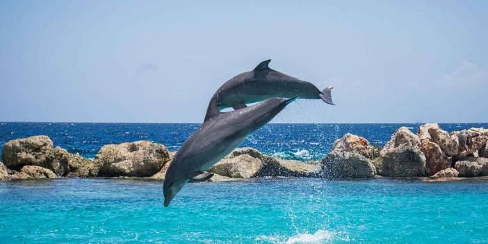 Okyanusta yeni canlı türleri bulundu