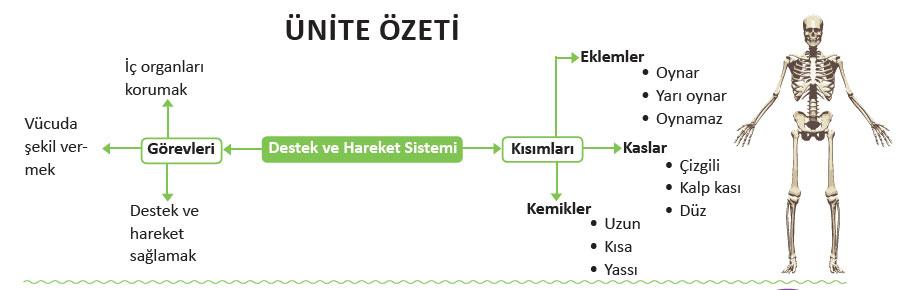 destek-ve-hareket-sistemi.jpg