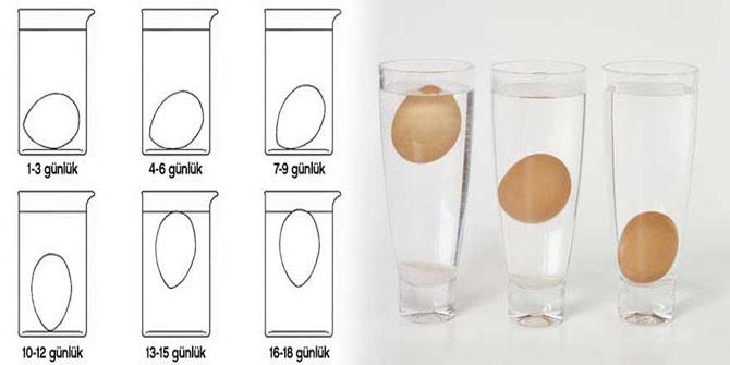 yumurta-testi.jpg